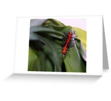 Oleander Caterpillar Greeting Card