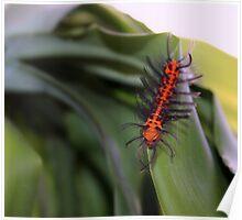 Oleander Caterpillar Poster