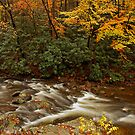 Laurel Creek by Gary L   Suddath