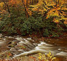 Laurel Creek by Gary L   Suddath