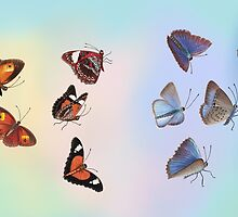 Let's Count Kisses - Butterflies 1 by Karen  Hull