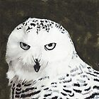 Snowy Owl by BrandyHouse