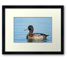Approachable Scaup Framed Print