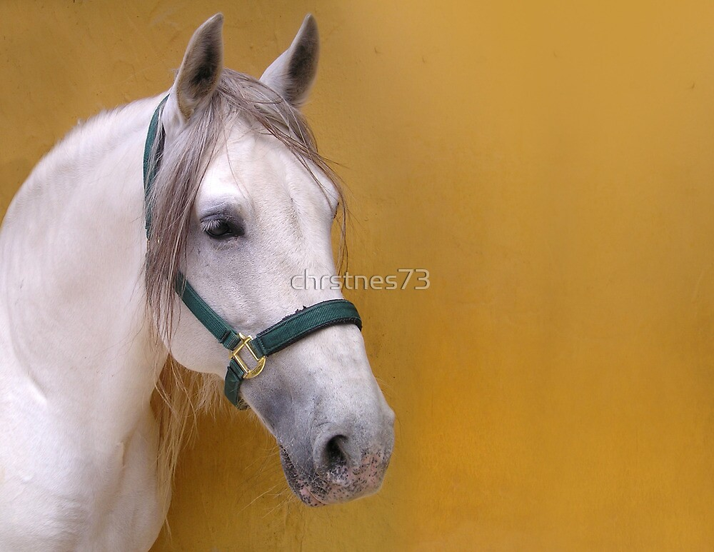 Andalusian Stallion by chrstnes73