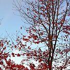 Rainbow & Tree... by Photos55