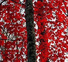 RED by Terri~Lynn Bealle