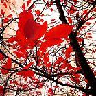 Red leaves by cycreation