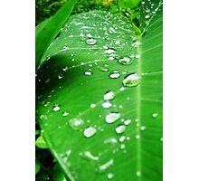 Hawaiin Droplet Photographic Print