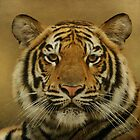 Tiger, Tiger by Sandy Keeton