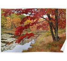 MapleTree In Autumn Poster