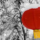 Chinese Lantern by Mike Moruzi