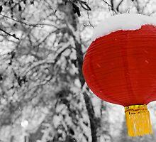Chinese Lantern by Mike Moruzi