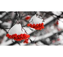 Mountain Ash Berries Photographic Print