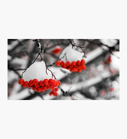 Mountain Ash Berries Photographic Print