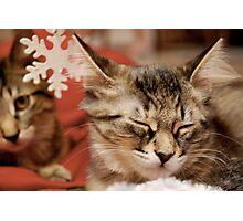 Cat Rescue Christmas 3 Photographic Print