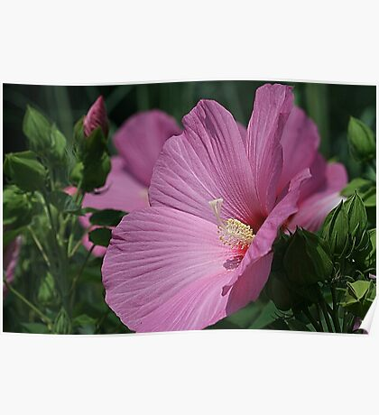 Hippy Dippy Hibiscus Poster