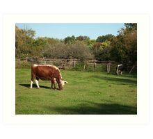 Landis Valley Oxen 1 Art Print
