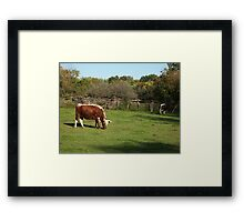 Landis Valley Oxen 1 Framed Print