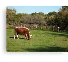 Landis Valley Oxen 1 Canvas Print