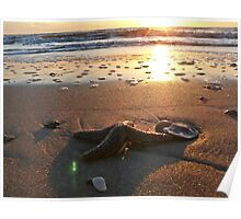 Sunrise Starfish Poster