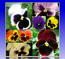 Just Pansies Collage by MidnightMelody