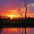 Sunset at Elmore by Joe Mortelliti
