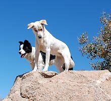 Oakley and Kitty by AZLiane
