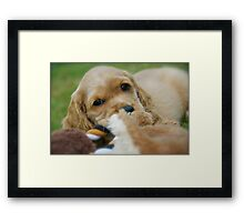 Tucker with Toys Framed Print