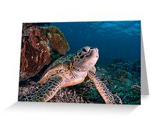 Green Turtle, Sipadan, Sabah, Malaysia Greeting Card