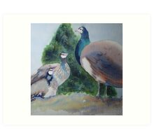 Peahens at Monsalvat, Eltham Art Print