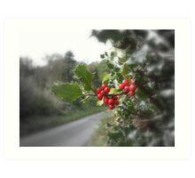 Holly & Berries Art Print