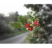 Holly & Berries Photographic Print
