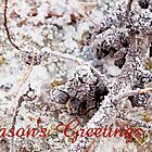 Crispy White - Season's Greetings by Katayoonphotos