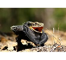 Eastern Bearded Dragon Photographic Print