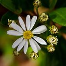 White Flower #1 by yewenyi