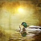 Mallard Dream by KBritt
