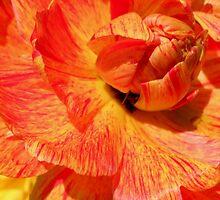 Flower Power by Debbie Stika