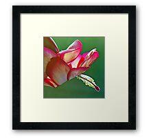Epiphyllum Cactus Flower Framed Print