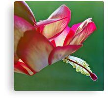 Epiphyllum Cactus Flower Canvas Print