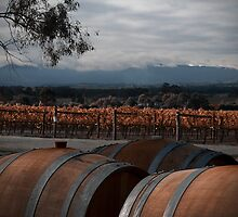 Sticks Vineyard by Di Jenkins