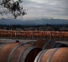 Sticks Vineyard by Di Jenkins