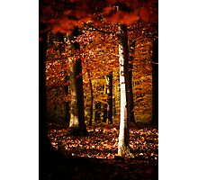 Autumnal mood #7 Photographic Print