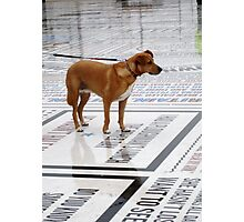 dog reading jokes Photographic Print