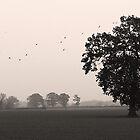 A hazy shade of Winter by theresa knox