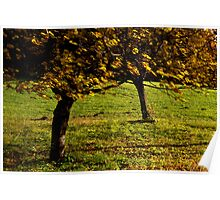Fall leaves in the wind Poster