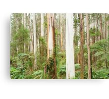 Mountain Ash Forest Canvas Print