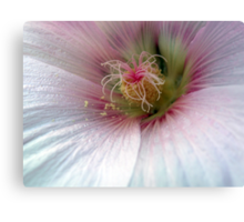 PINK MARSHMALLOW 1 Canvas Print
