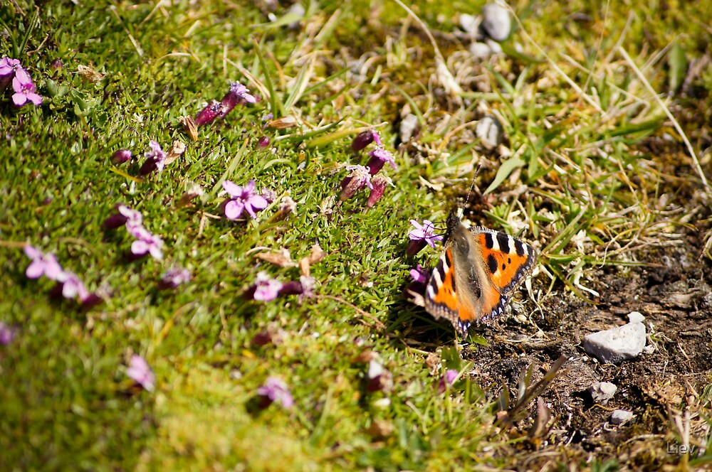 Butterfly 1 by Liev