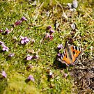 Butterfly 1 by Liev
