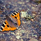 Butterfly 3 by Liev